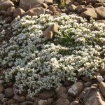 Benjamin Zwittnig: Potovanje po Velebitu in Dinari v letu 2016 ter živi kamenčki in kaktusi v moji zbirki (predavanje – februar 2017).