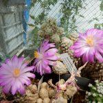 Ogled Janezove zbirke kaktusov