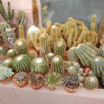 Obisk rastlinjaka s kaktusi Bešlić iz Petrinje