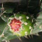 Jure Slatner: Nekaj vprašanj o kaktusih in opuncijah (predavanje-september 2018)