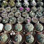 Primož Komel: Obiski čeških zbiralcev in gojiteljev kaktusov in sočnic (predavanje-januar 2019)