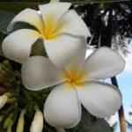 Simona Koprivnikar: Šrilanka in Maldivi – potovanje za dušo in oči (predavanje – februar 2020)